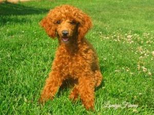PuppyFind.com,501050